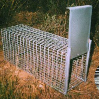 Jaula trampa captura ratas