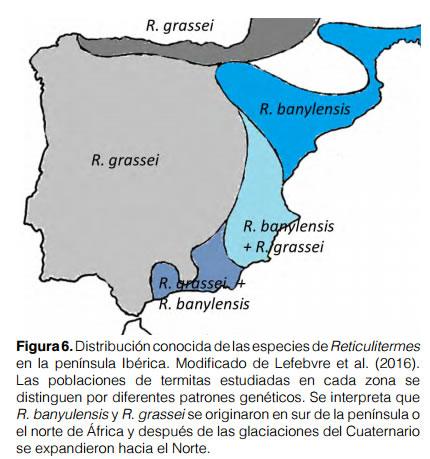 Mapa termitas España